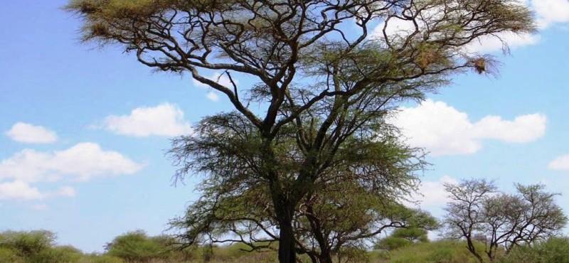 Kenya e Tanzania 2005