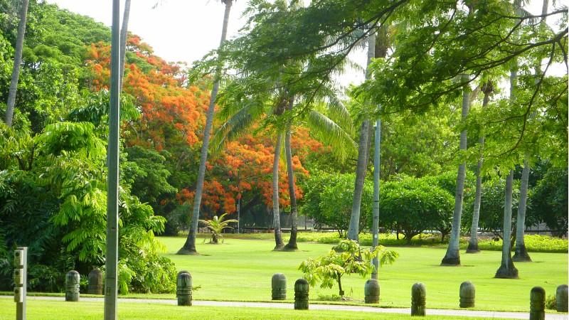 Giardino botanico a Darwin_1