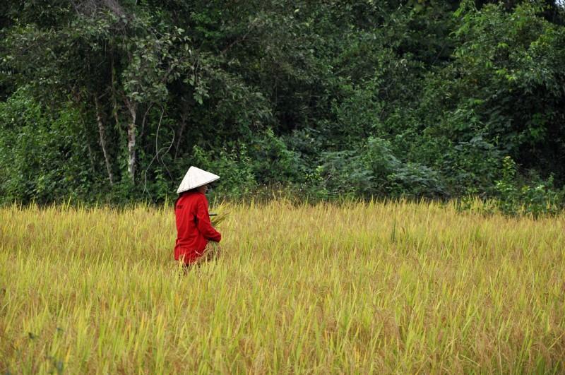 laos2013 (465)