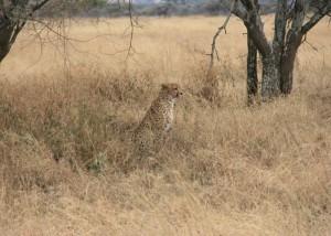 serengeti13