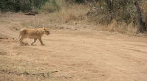 serengeti18